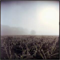 Nebelland (Ulla M.) Tags: nebel fog expiredfilm greatwall canoscan8800f tetenalcolortec selfdeveloped selbstentwickelt see 6x6 mittelformat feld acker tau vignette umphotoart