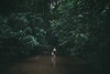 Jungle (Mathijs Buijs) Tags: jungle river trees girl woman wading walking leaves green rainforest sumatra indonesia southeast asia canon eos 7d