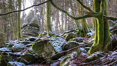 stony forest (All Shine) Tags: winter forest wood colors stones texture nature landscape