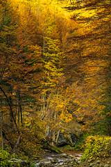 Autumn Palette at Monti della Laga (giorgio.martini ph) Tags: partco nazionale grasasso park national snow neve ice ghiaccio autunno tramonto autumn sunset sunrise moorise lake lago
