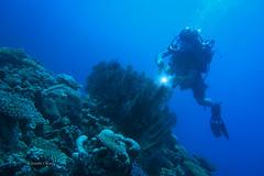 Explore the reef (kyshokada) Tags: fiji mamanuca marinelife mamanucaislands underwater pacific corals diving scuba sony a7 2870 reef gothamcity