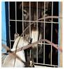 Weihnachtsbesuch * Christmas visitor * Visita Navidad *    . P1330655-001 (maya.walti HK) Tags: 2016 animales animals burros cats copyrightbymayawaltihk donkeys esel flickr gatos isis katzen mägimuck panasoniclumixfz200 tiere weihnachtsbesuch 271216