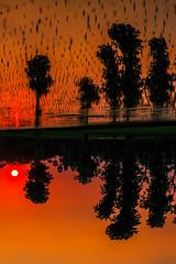 Sunset @ SriKalahasti (vamsichennupalli) Tags: vamsichennupalli vamsichennupalliphotography sunset evening fields greenfields wallpaper background mud water sun plesent calm