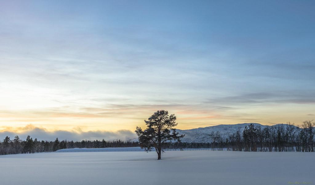 single i norge Alta