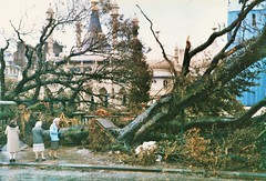 Brighton After The Hurricane,October 1987 (brightondj - getting the most from a cheap compact) Tags: pentaxmesuper scan sanned 35mm 1987 1980s hurricane weather storm brighton brightonandhove trees royalpavilion brightonpavilion brightonroyalpavilion
