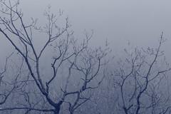 Fog (katharinabeniers) Tags: fog canada ontario tree hike dslr canon winter