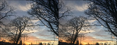 Spring-like winter sunset (anobjectn) Tags: crossview crosseyestereo tree albanyny 3d stereophotography