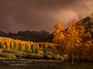 Ominous Storm Rolls in Over the Golden Aspen in the Uncompaghre Wilderness