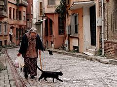 The cat lady@ist.tr (Tilemachos Papadopoulos) Tags: street urban cats turkey candid qoq m43 mft mirrorless