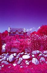 Building and Garden, Montauk, NY (rosemaryhawkins) Tags: garden olympus montauk colorinfrared om2sp aerochrome