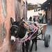 Mule in Marrakech Medina