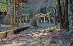 On a shrine ground (odeleapple) Tags: film zeiss 50mm nikon shrine ground carl f5 planar fujicolor100 zf2