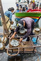IKAN (eamediasyn) Tags: perahu ikan lampung nelayan kapal kelautan perikanan tengkulak