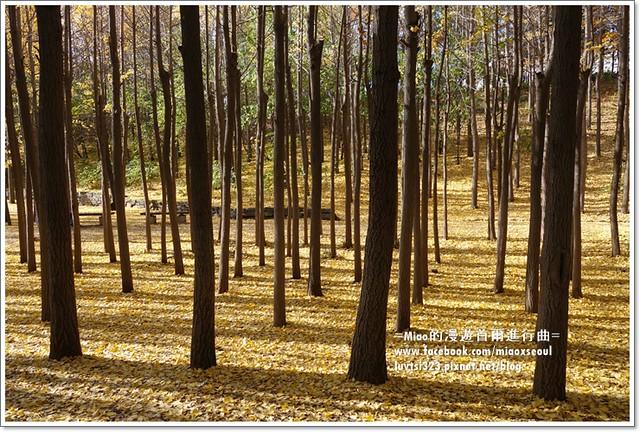 서울숲12
