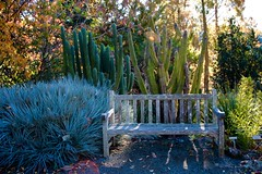 Cactus Garden (alexispadilla) Tags: california travel cactus nature cacti garden berkeley bayarea succulents universityofcaliforniabotanicalgardenatberkeley