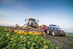 3U4A1539 (Bad-Duck) Tags: vinter traktor mat ropa hst ker betor maskiner kvll skrd flt jordbruk grda lantbruk rstid livsmedel sockerbetor fltarbete livsmedelsproduktion betupptagare omstndigheter