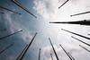Flagpoles (JØN) Tags: nikon alabama maxwell montgomery 1735mmf28d gunter flagpoles d700
