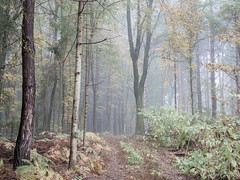 (Nikola Ostrun) Tags: forest tree trees morning fog foggy muted nature outdoor