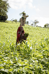 Hunger (Ramon Sanchez Orense) Tags: burundi cibitoke woman hunger hambre field africa onassignment green verde east