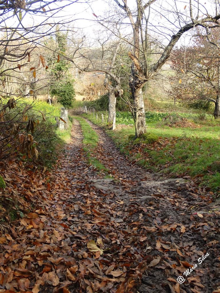 Águas Frias (Chaves) - ...caminho atapetado de folhas caídas ...