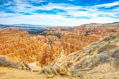 The Old and the Very, Very ...Very Old (Herculeus.) Tags: bouldersstonerocks brycecanyonnp canyon cliffs clouds country day deadtrees erosion evergreens fall hoodoos horizon landscape landscapes ledge mountains outdoor outdoors outside rimtrail scrub sky trees ut