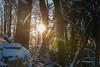 Winterwald mit Sonne (JBsLightAndShadow) Tags: heidelberg nikon nikond750 d750 tamron tamronsp2470mmf28divcusd winter winter2017 schnee snow wald odenwald forest königstuhl baum tree bäume trees sonne sonnenschein sun sonnig sunny sunshine sunset sonnenuntergang licht sonnenlicht