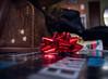 topped with a bow (351/366) (severalsnakes) Tags: mx1 missouri pentax saraspaedy sedalia bow christmas gift ribbon solstice wrappingpaper xmas