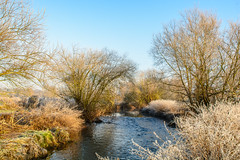 The River Stour On A Winters Morning (williamrandle) Tags: riverstour river water winter kidderminster worcestershire uk england 2016 frost ice cold trees plants outdoors landscape nikon d7100 tamron2470f28vc beauty serene