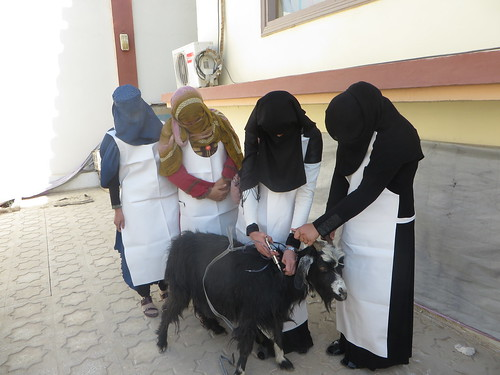 RADP-South livestock-vaccination training