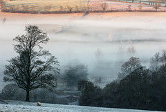 Winter Morning in the Cotswolds (ukmaac) Tags: winter fogcotswolds fog cotswolds waiting sheep sunrise landscape england gloucestershire color hills morning ewe animal