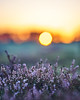 Sunsets (Gislon) Tags: sonya7s samyang85mm mendips mendiphills somerset charterhouse