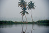 three trees  mist and a man (Free As I Can Be) Tags: mist morning coconut trees lake riverlife backwaters kerala