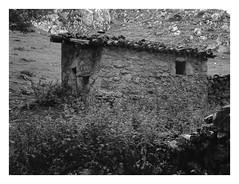 Lagos de Covadonga #7 (area51delcorazon) Tags: byn blancoynegro bw blackandwhite asturias lagos covadonga españa spain rolleirpx400 200 hc110h hc110 fujifilmga645 ga645 fuji fujifilm film 120 6x45 filmdev:recipe=11139 kodakhc110 film:brand=rollei film:name=rolleirpx400 film:iso=200 developer:brand=kodak developer:name=kodakhc110