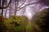 Dhoon Glen (cabmanstu) Tags: isleofman dhoon glen beach woods mist path outdoors trees
