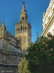 Sevilla (Jose Abadin) Tags: sevilla seville giralda catedral cathedral andalucia españa spain naranjo luz sky city orange blue