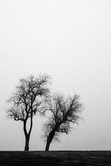 White Rock 100-400 Test (joetografer) Tags: nature texas xt2 fuji fujifilm fujinon lake mirrorless morning park xf