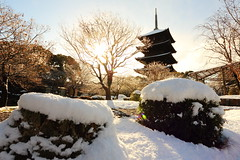 Morning Light (Teruhide Tomori) Tags: 教王護国寺 東寺 京都 世界遺産 日本 五重塔 鳥居 神社 shrine torii sky snow winter 雪 冬 pagoda temple kyoto japan japon landscape worldheritage tojitemple architecture woodenbuilding construction