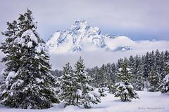 Winter (Amy Hudechek (Happy Photographer)) Tags: winter grand teton national park gtnp snow mountain trees wilderness nature landscape clouds