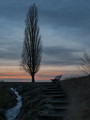 Projet 365 #27 -.jpg (danielgschmitt) Tags: france sonneuntergang gel wiewersheim sunset themes banc coucherdesoleil canards alsace janvier hiver europe etang glace wiwersheim grandest fr