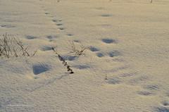 Snowprints ❄ (ChemiQ81) Tags: add tags beta polska poland polen polish polsko wojkowice zagłębie chemiq d5100 nikon nikkor polonia pologne ポーランド بولندا полша poljska pollando poola puola πολωνία pholainn pólland lenkija polija польша пољска poľsko polanya lengyelországban lengyel lengyelország басейн dabrowski польща польшча dąbrowskie 2017 winter zima outdoor śnieg snow white biały prints ślady footprints snowbank