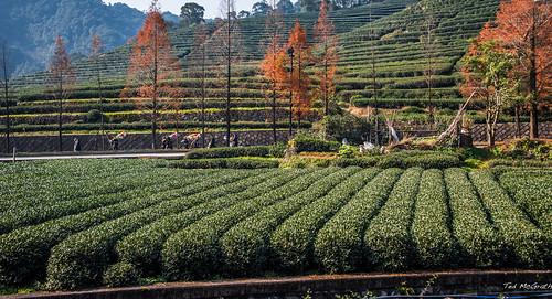2016 - China - Hangzhou - Meijiawu Tea Culture Village - 2 of 5