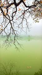 _U1H8391 Hoan Kiem Lake,Hanoi,0317 (HUONGBEO PHOTO) Tags: thángba tháprùa hồhoànkiếm hồgươm cây turtletower hanoiscenery scenery asia fog winter hanoicity hanoicapital hoankiemlake lake tree outdoor