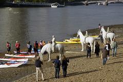 Thames horse sculptures and kayakers (MJ Keane) Tags: thames vauxhall horsesculpture jasondecairestaylor