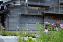 DSCF5848 (catfish.boogie) Tags: flower japan hokkaido hakodate xe2 xf35mmf14r