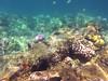 IMG_3184 (Elise Granados) Tags: island hawaii big sep8