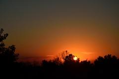 DSC_2319 (bfaling) Tags: trees columbus ohio red summer orange sun yard sunrise back glow neighborhood oh 2015