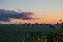 Evening on the countryside