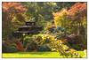 A Delightful English Garden (Audrey A Jackson) Tags: charity autumn colour nature sunshine gazebo 1001nights fundraising walsall 1001 ights opengardens canon60d fourseasonsgarden 1001nightsmagiccity