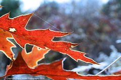 _DSC4524 (1) (frankfoto) Tags: morning autumn frost ithaca fingerlakes westhill ecovillage
