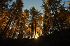 Lago dei Cavalli Ottobre 2015 (Gabriele Grazioli) Tags: lago autunno cavalli